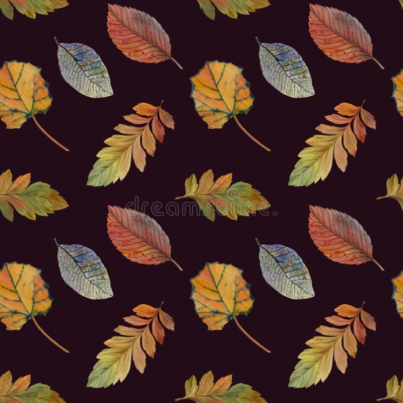 不同颜色设计的典雅的秋叶 五颜六色的叶子的无缝的水彩样式 库存例证