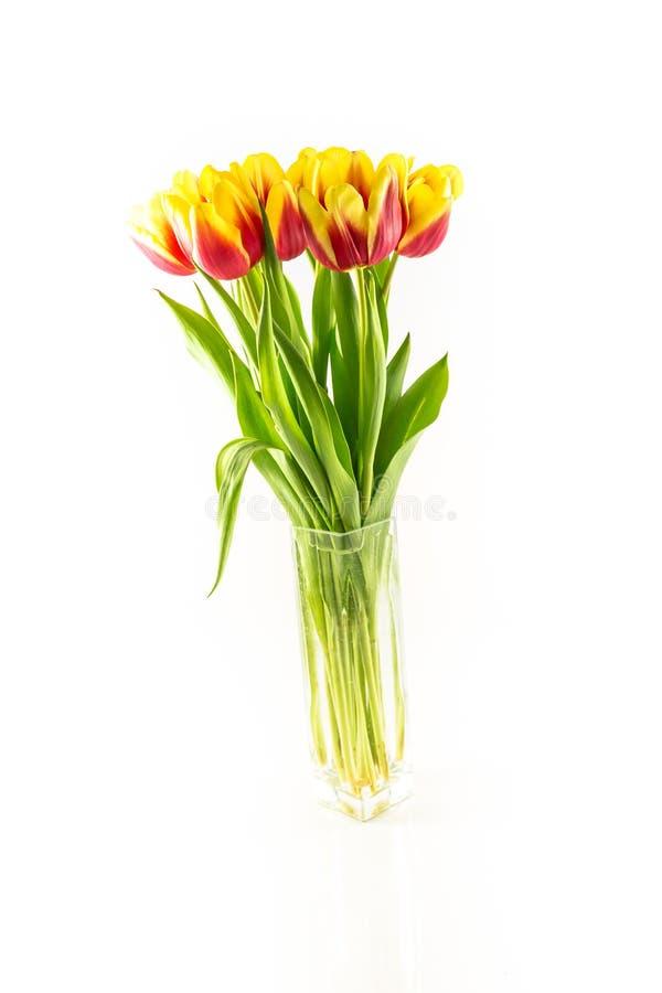 不同颜色郁金香花束  库存照片