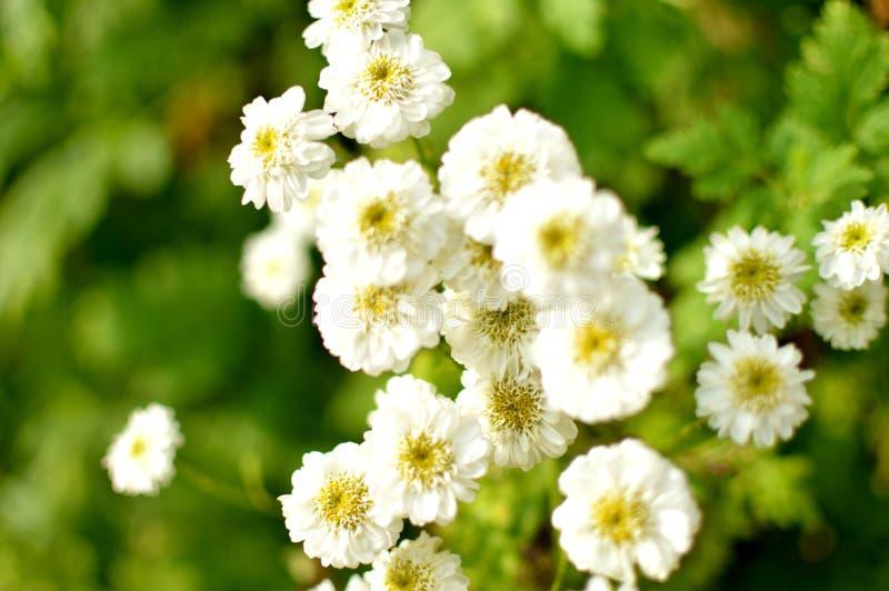 不害怕茂盛 背景开花花开花天空白色 免版税库存照片