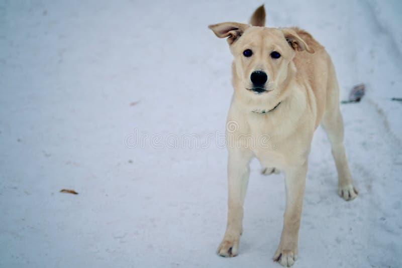 不快乐的狗画象外面在冷的冬天雪 库存图片