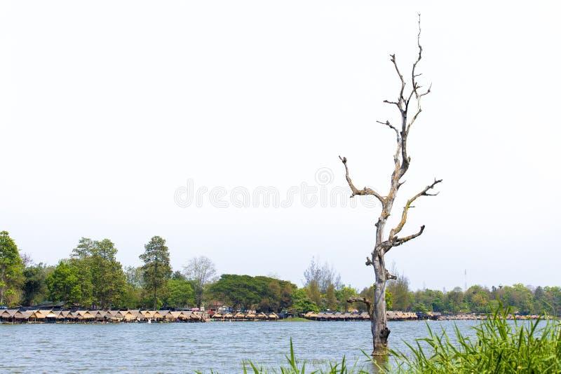 不生叶的树,湖,浮动小屋,天空 免版税库存照片
