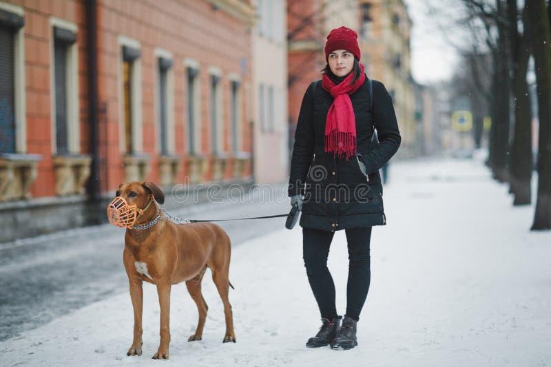 与一个主人的Rhodesian ridgeback在步行的冬天在城市 狗女孩 免版税图库摄影