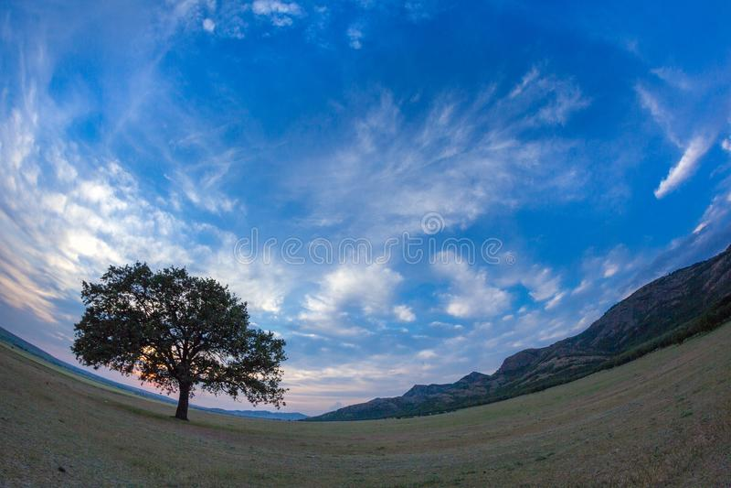 与一个偏僻的橡树的美好的风景在日落和剧烈的云彩 免版税库存图片