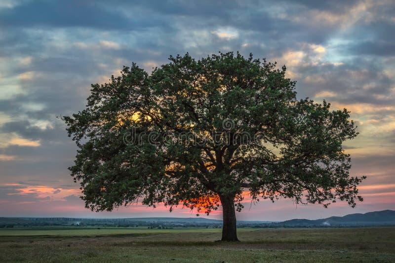 与一个偏僻的橡树的美好的风景在日落和剧烈的云彩 免版税库存照片