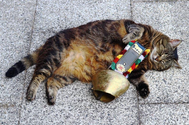 与一个大母牛的颈铃的一只猫 有响铃的一个衣领猫的
