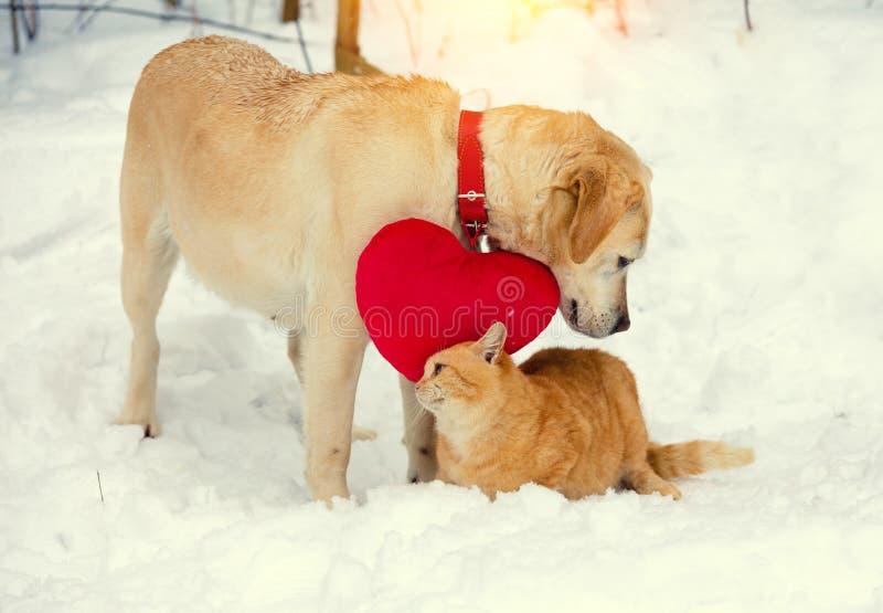 与一个心形的枕头和红色猫的拉布拉多狗 免版税图库摄影