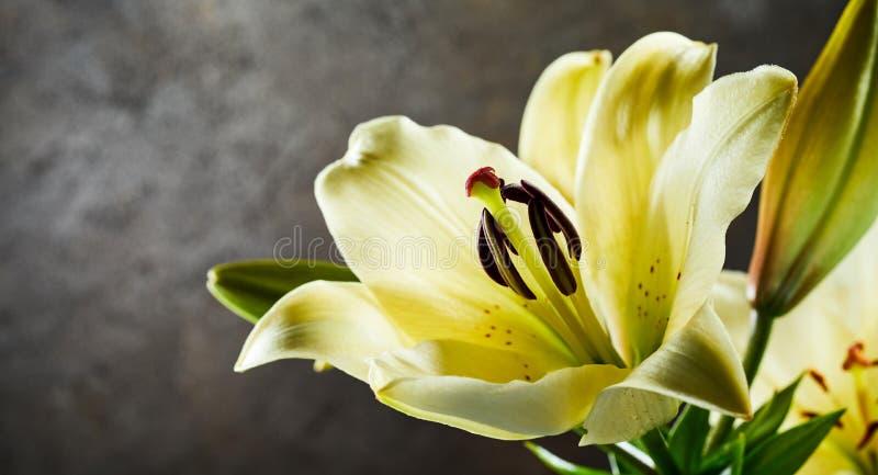 与一个新鲜的黄色黄花菜的全景横幅 库存图片