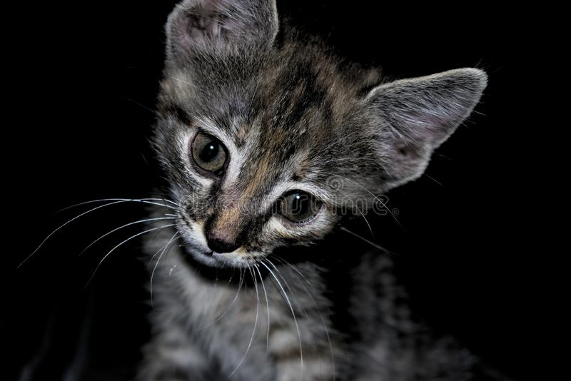与一个有趣和好奇表示的逗人喜爱的黑和灰色虎斑猫 图库摄影