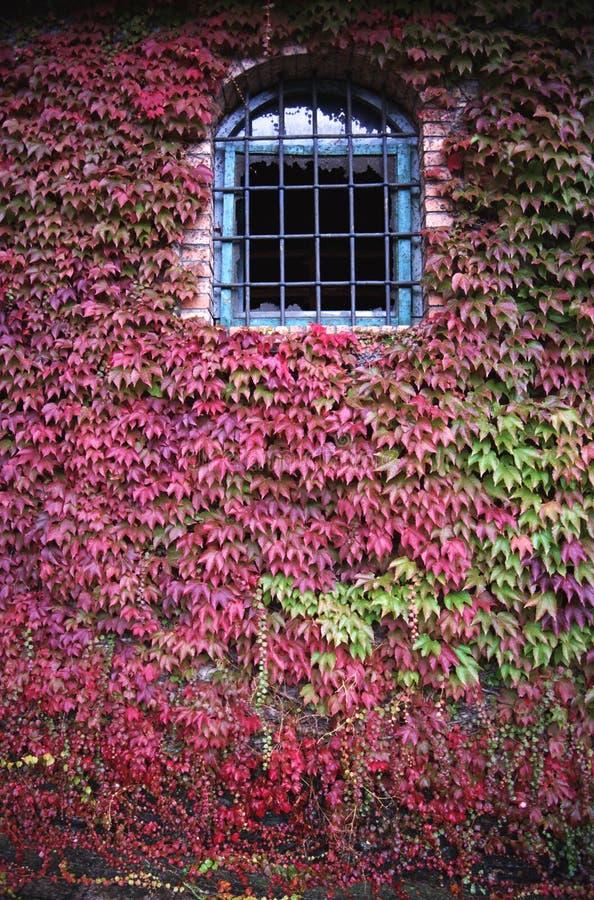 与一个格子的被成拱形的窗口在植物背景  免版税库存图片