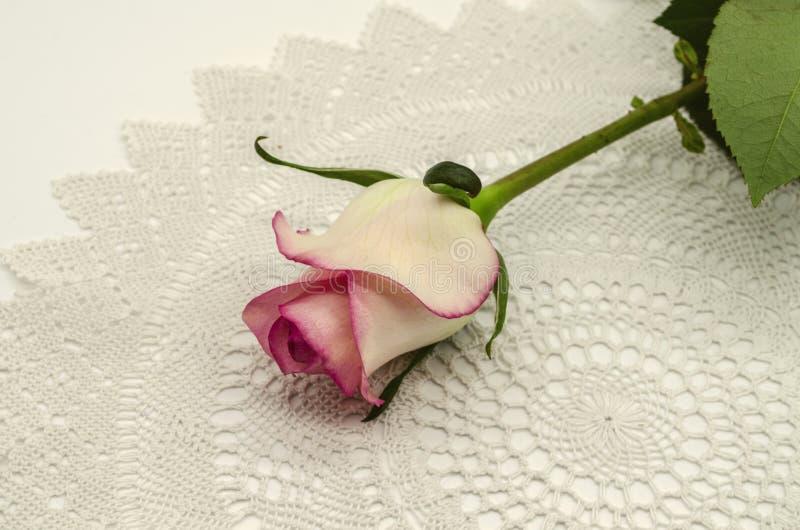 与一个桃红色边界的白色玫瑰花蕾在词根的边缘与叶子,谎言有一个角度在一块白色被编织的透雕细工餐巾顶部 免版税图库摄影