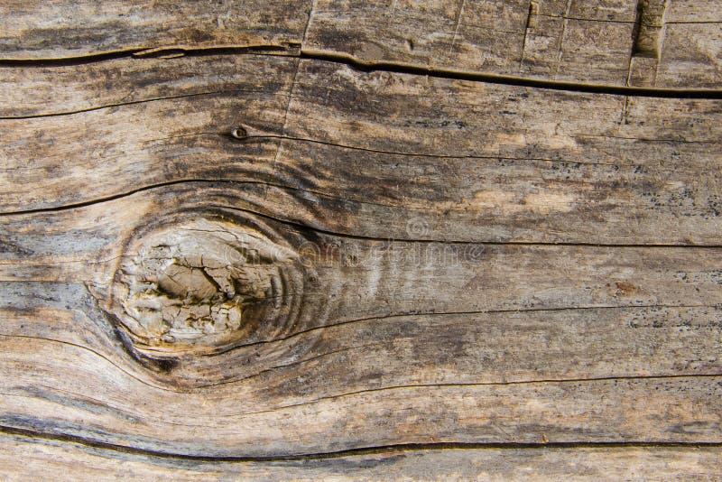 与一个残破的分支的老干燥日志 库存照片