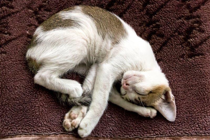 与一个滑稽的姿势的一只逗人喜爱的睡觉白棉布小猫 库存图片