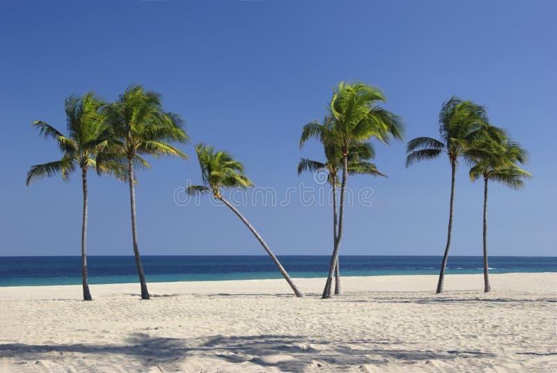 与一个的棕榈树弯曲 免版税库存图片