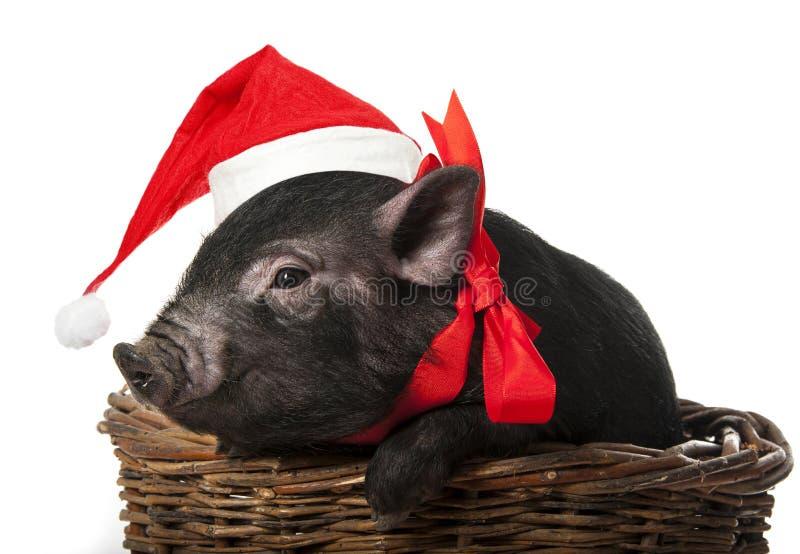 与一个红色圣诞老人盖帽的黑猪 免版税库存照片