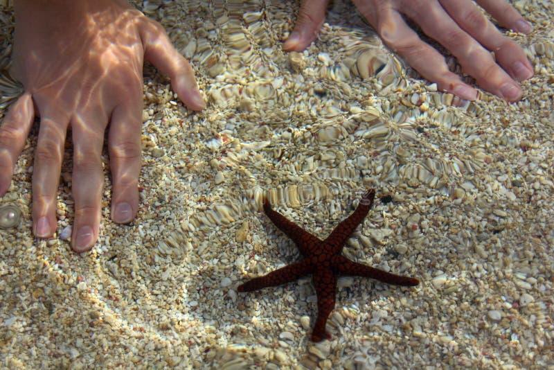 五颜六色的水下的场面 与一个美丽的海星的会议 从海水表面的阳光反射 图库摄影