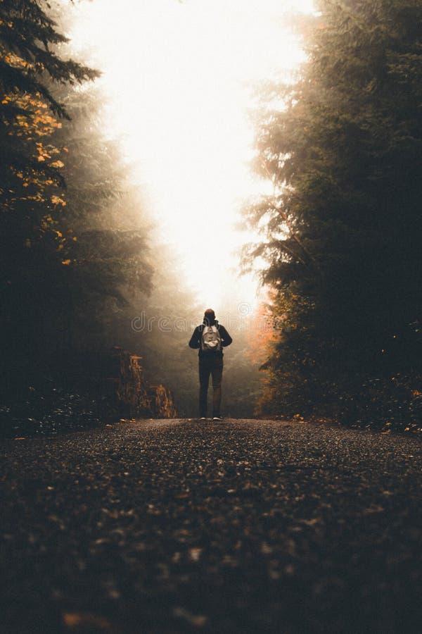 与一个背包身分的男性在看光的高厚实的树之间的一条道路 库存照片