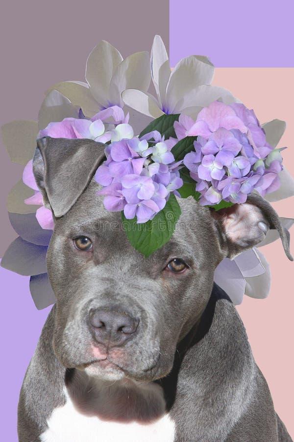 与一个花圈的狗在他的头,艺术拼贴画 库存照片