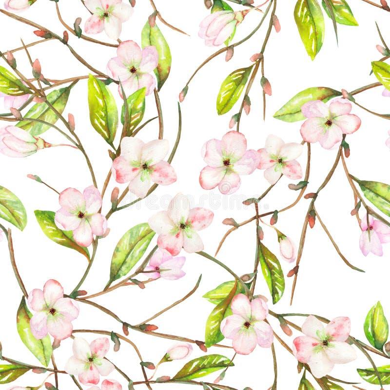 与一个苹果树分支的装饰品的一个无缝的花卉样式与嫩桃红色开花的花和绿色叶子的,被绘 向量例证