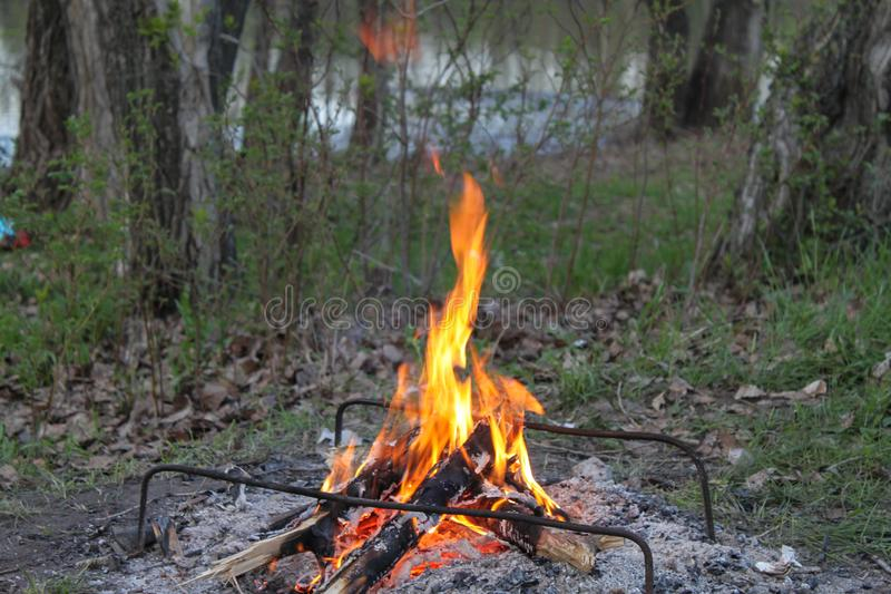 与一个营火的一顿野餐在森林 图库摄影