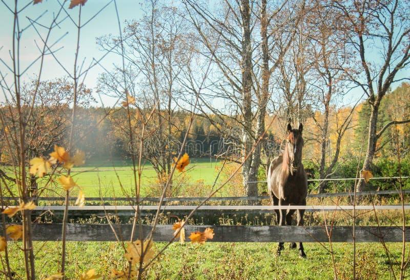 与一匹好奇马的秋天风景 免版税库存图片
