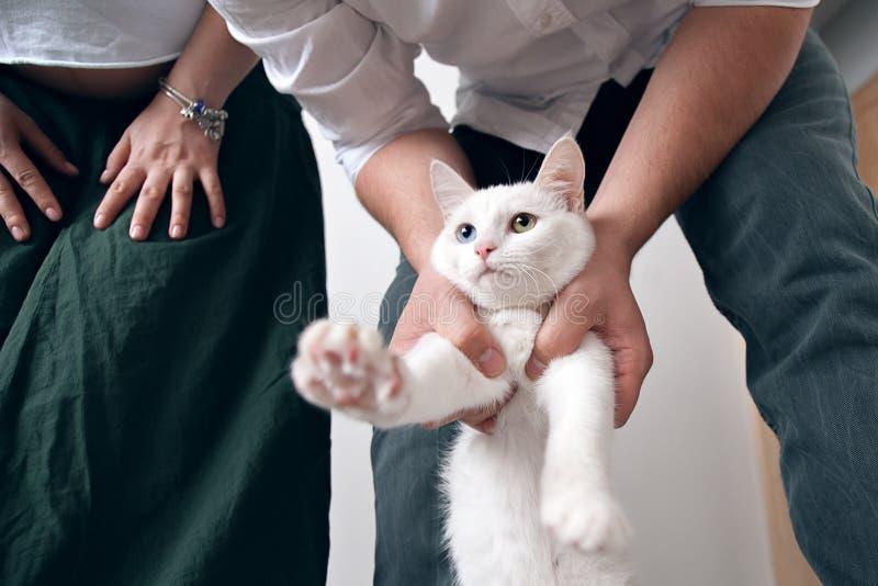与一双蓝眼睛和一嫉妒的白色猫 他派遣了到一栋新的公寓 乔迁庆宴 免版税图库摄影