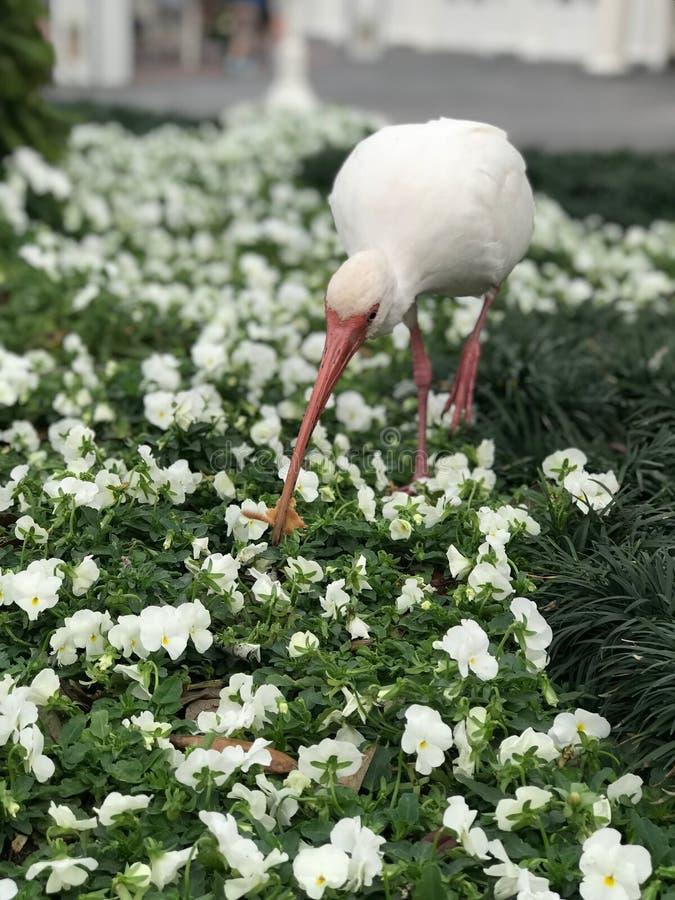 与一只异乎寻常的鸟的白花 免版税库存图片