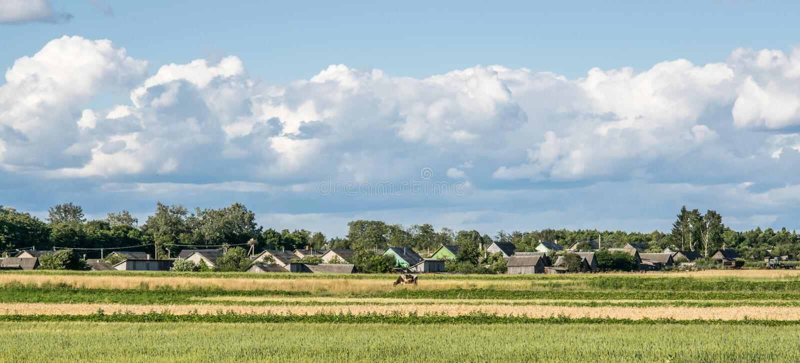 与一头孤独的母牛的农村风景在以村庄为背景的草甸 库存图片