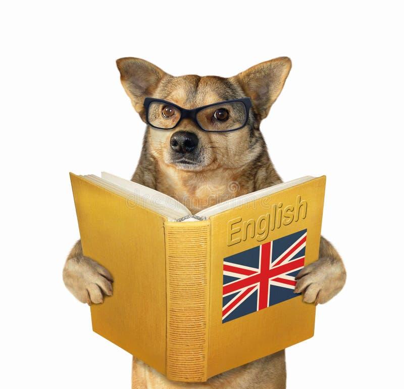 与一开放英语的狗 免版税库存图片