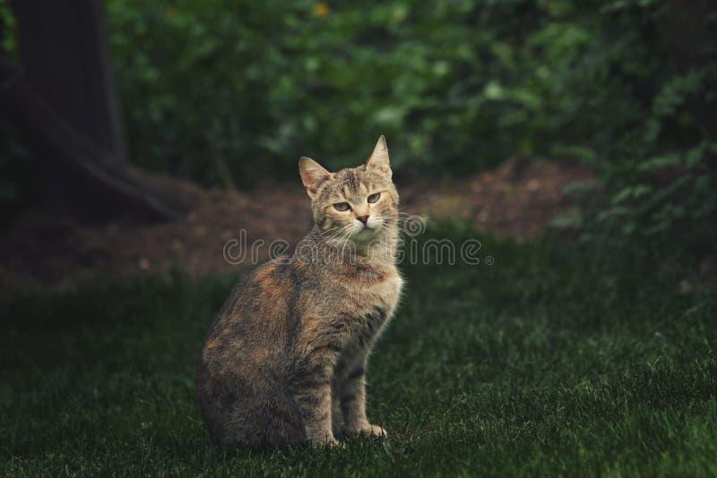 与一张严肃的面孔的猫 免版税库存图片