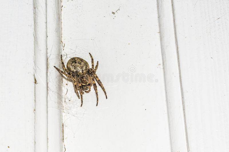 与一张蜘蛛网的蜘蛛在一个白色对象的背景在晚上 免版税图库摄影