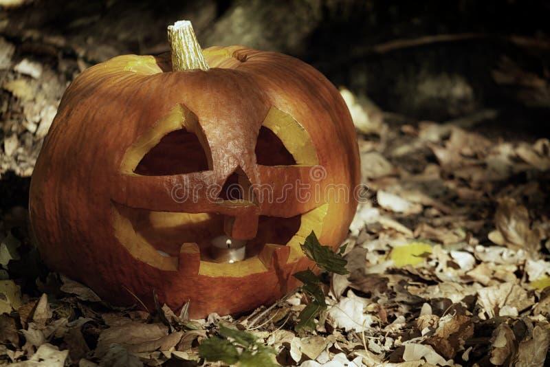 与一张被雕刻的面孔的一个大南瓜 万圣夜标志在秋天森林里 免版税库存图片