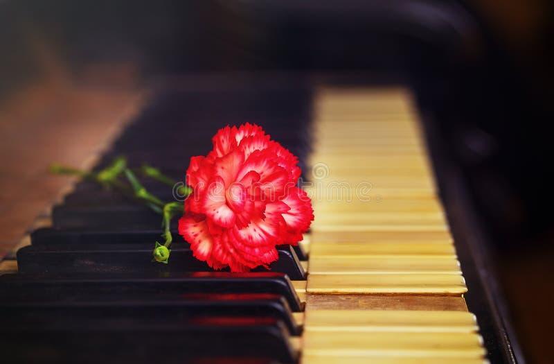 与一支红色康乃馨的老葡萄酒gand钢琴钥匙开花,葡萄酒图片 库存图片