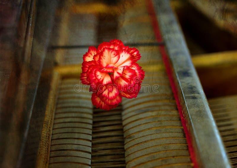 与一支红色康乃馨的老葡萄酒gand钢琴钥匙开花,葡萄酒 图库摄影