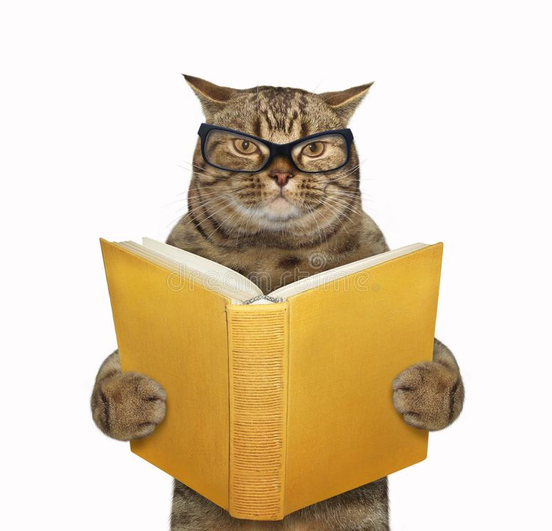 与一本开放书的猫 皇族释放例证