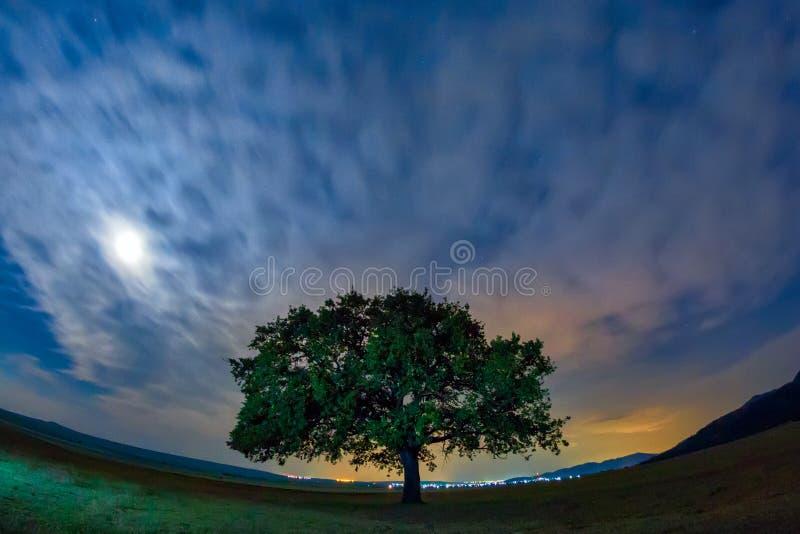 与一朵偏僻的橡树、剧烈的云彩和繁星之夜天空的美好的风景与月光 库存图片