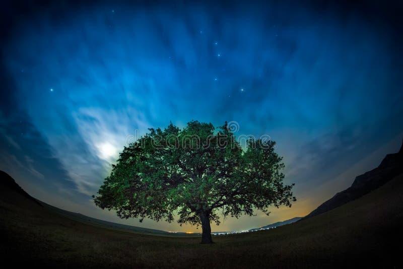 与一朵偏僻的橡树、剧烈的云彩和繁星之夜天空的美好的风景与月光 库存照片