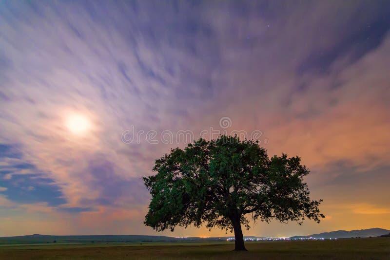 与一朵偏僻的橡树、剧烈的云彩和繁星之夜天空的美好的风景与月光 免版税库存照片