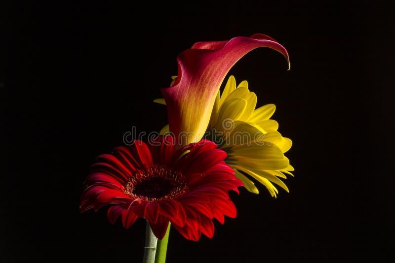 与一朵红色和一朵黄色gerber雏菊的水芋百合 免版税库存照片