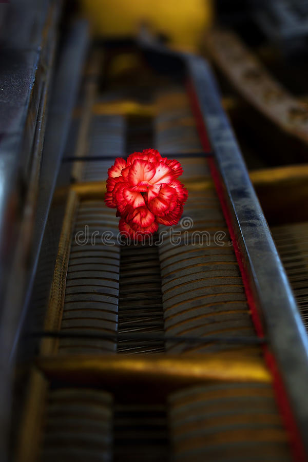 与一朵红色康乃馨花的古色古香的大平台钢琴机械工细节 库存图片