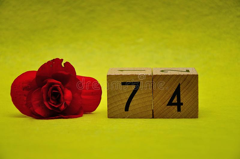 与一朵红色花的第七十四 库存照片
