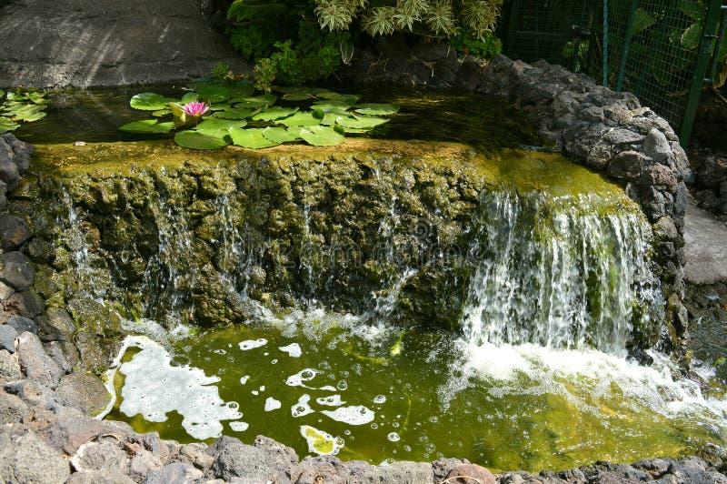 与一朵waterlilly花的庭院瀑布 免版税库存图片