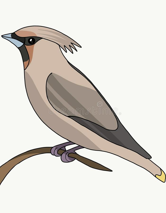 与一束的布朗鸟 库存例证