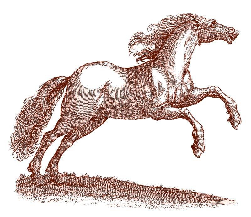 与一根吹的鬃毛的跳跃的匈牙利马马属 库存例证