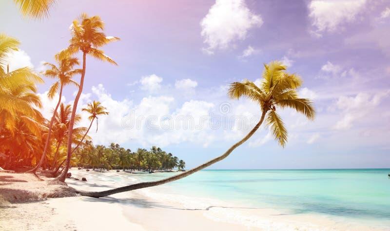 与一根长的树干的一棵棕榈树在前景垂悬在含沙岸 在沈默、休息和天堂附近的加勒比海岸 库存图片
