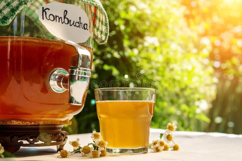 与一棵医疗春黄菊的刷新的kombucha茶在老葡萄酒瓶和玻璃,与标签书面kombucha对此在背景  免版税库存图片