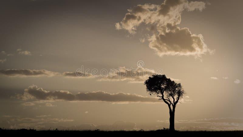 与一棵唯一树的非洲日落 马赛马拉,肯尼亚 免版税库存照片