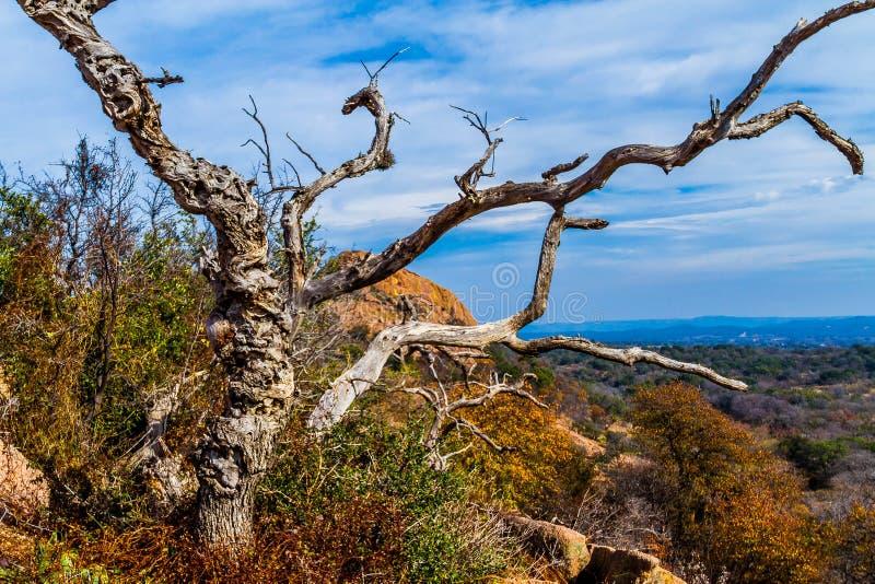 与一棵多节死的树的一个美好的狂放的西部看法,土耳其峰顶看法在着魔岩,得克萨斯的。 免版税库存照片