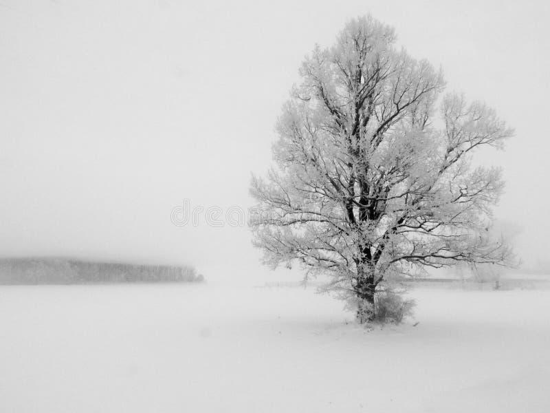 与一棵孤立树的抽象冬天风景在白色雪 免版税库存图片