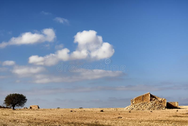 与一棵孤零零树的一个干旱的西班牙风景 免版税库存图片