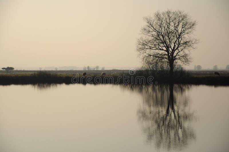 与一棵树的反射的有薄雾的风景在水中 图库摄影